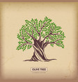 olive beautiful tree vector image vector image