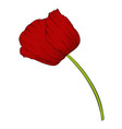 beautiful red poppy in a hand-drawn graphic style vector image vector image