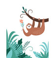 cute adorable sloth hanging on branch tree vector image