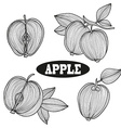 hand drawn apple fruits vector image