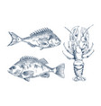 seafood and fish engraving vector image vector image