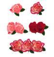 set a beautiful roses vector image vector image