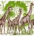 Animal print safari wallpaper giraffe in vector image