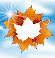 Autumn leaves maple with copy space vector image vector image