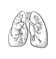 lungs doodle drawing Medical background vector image vector image