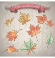 set autumn leaves maple chestnut and other vector image