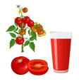 tomatoes and glass of juice vector image