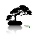 bonsai tree black silhouette of bonsai vector image