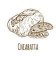 chiabatta hand drawn vector image