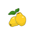 Quince Isolated on White vector image vector image