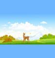 autumn deer vector image vector image