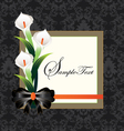 Calla lilies on black damask background vector image