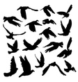 Doves and pigeons set for peace concept and vector image vector image