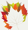 Leaf autumn - background vector image vector image