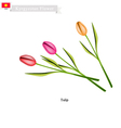 Tulip Flowers The Popular Flower of Kyrgyzstan vector image vector image