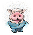 boar wrapped in a knitted scarf blue color vector image