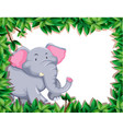 elephant in nature frame vector image vector image