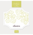 Product sticker with hand drawn cilantro or vector image