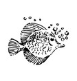 hand drawn sketch of fish on vector image vector image