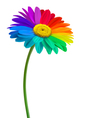 Rainbow daisy flower background vector image vector image