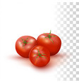 red fresh tomato vector image