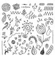 Set of hand drawn floral doodle elements vector image