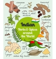 Indian herbs and spices vector image