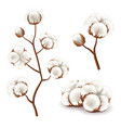 cotton flowers set vector image
