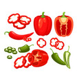 hot red green chili pepper vector image