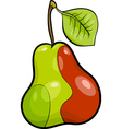 pear fruit cartoon vector image vector image