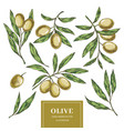 olive elements collection vector image
