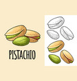 pistachio nut with and without shell vector image vector image