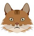 selkirk rex cat avatar cat breeds vector image