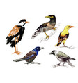 wild exotic birds set vector image