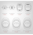 Baby First Teeth Chart vector image vector image
