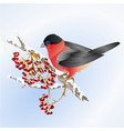 bird bullfinch small songbirdon on on snowy tree vector image vector image