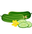 cucumbers vector image vector image