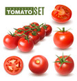 realistic tomato fruits collection vector image vector image