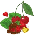 Ripe Red Chocolate Covered Strawberries and Cherry vector image