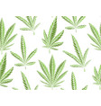 seamless texture green leaves marijuana on a vector image vector image