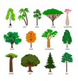 trees forest tree set with titles birch vector image vector image