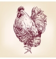 Chicken vintage hand drawn