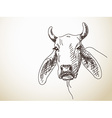 long ears of cattle vector image vector image