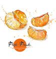 Pieces of Tangerine vector image vector image