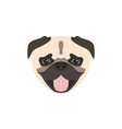 pug dog icon isolated on white background animal vector image