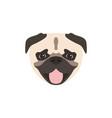 pug dog icon isolated on white background animal vector image vector image