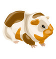 sea pig icon cartoon style vector image vector image