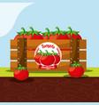 tomato vegetable always fresh in wood basket vector image vector image