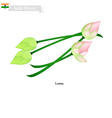 Water Lily Blossom The National Flower of India vector image vector image