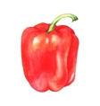 watercolor sweet pepper vector image